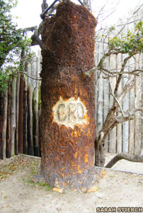 The Roanoke CRO tree