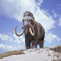 Large beasts such as the mammoth became extinct