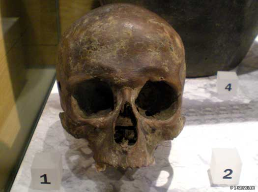 Roman-era skull from the Walbrook