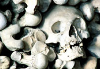 Skulls of the victims
