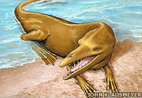 Whales may have looked like this 47 million years ago